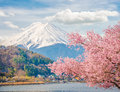 Mountain Fuji in spring ,Cherry blossom Sakura Royalty Free Stock Photo