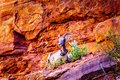Mountain Goats At The Zion-Mou...