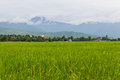 Mountain and green rice field in thailand chiangmai northen Stock Photography