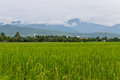 Mountain and green rice field in thailand chiangmai northen Royalty Free Stock Photography