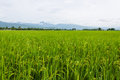 Mountain and green rice field in thailand photo form thai Royalty Free Stock Photography