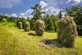 Mountain haymaking in the fields poland Royalty Free Stock Photo