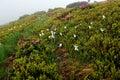 Mountain heavy fog in mountainous terrain in the spring Stock Photography