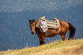Mountain horse in the mountains montenegro europe Stock Photography