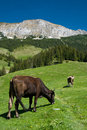 Mountain husbandry in Romania Stock Image