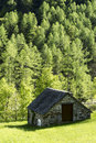 Mountain hut near a forest of larch switzerland Stock Photo