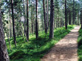 Mountain jogging track in summer at Tara mountain Royalty Free Stock Image