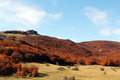 Mountain landscape autumn with beeches a in madonie mountains near palermo sicily cut Royalty Free Stock Images