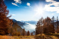 Mountain landscape in autumn: larch trees, shining sun, foggy va Royalty Free Stock Photo