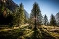 Mountain landscape autumn Valtellina Italy Royalty Free Stock Photo
