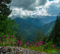 Mountain landscape with flowers on foreground in svaneti georgia Stock Photography