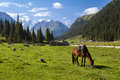 Mountain landscape with grazing horse tien shan kyrgyzstan Royalty Free Stock Image