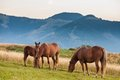 Mountain landscape with grazing horses Royalty Free Stock Photo