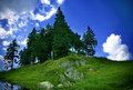 Mountain landscape - green grass, trees and sky Stock Photos