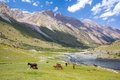 Mountain landscape with group of horses pasturing Stock Photos