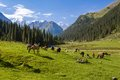 Mountain landscape with herd of horses pasturing Stock Photography