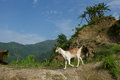 Mountain landscape. Hills, palm trees and a goat. Royalty Free Stock Photo