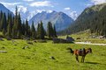 Mountain landscape with horse tien shan kyrgyzstan Royalty Free Stock Images