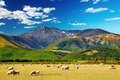 Mountain landscape, New Zealand Royalty Free Stock Image
