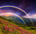 Rainbow over the flowers Royalty Free Stock Photo