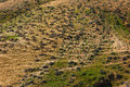 Mountain landscape sheep trails on the slopes Stock Photos
