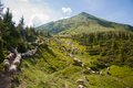 Mountain landscape with sheeps in the carpathians sheep herds Stock Photo