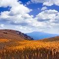 Mountain meadow. Stock Image