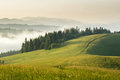 Mountain meadow with green grass, trails and forest Royalty Free Stock Photo