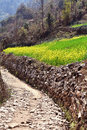 Mountain path with crop fields Royalty Free Stock Photo