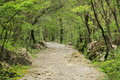 Mountain path in Paklenica Royalty Free Stock Photo