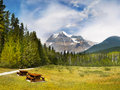 Mountain Range Landscape, Canada Royalty Free Stock Photo