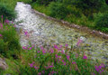 Mountain river with flowers pink along a stream Royalty Free Stock Photos
