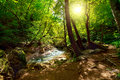 The mountain river in the forest at night and sunlight Stock Images