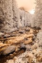 mountain river in forest in Slovakia. autumn colors. infrared im