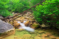Mountain river a stream of water in forest and terrain crimea the grand canyon Royalty Free Stock Images