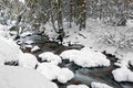 Mountain river in winter forest Stock Images
