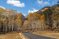 Mountain road through aspens in fall a showing brilliant golden colors Royalty Free Stock Photo