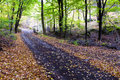 Mountain road in a beautiful autumn forest. Stock Photography