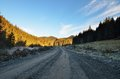 Mountain road empty high altitude off through fir forest in Stock Photo