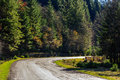 Mountain road near the coniferous forest with cloudy morning sky empty asphalt painted single white line in light Stock Photography