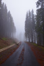 Mountain road through pines on foggy wheater bitum forest in a morning Royalty Free Stock Photography