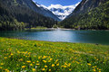 Mountain scenery clear lake with meadow flowers in foreground