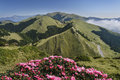 Mountain scenery with rhododendron flower,Taiwan. Stock Images