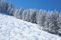 Mountain ski slope and winter forest Stock Image