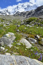 Mountain stream in an alpine meadow Royalty Free Stock Photo