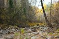 Mountain Stream In Autumn Forest