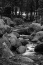 Mountain stream in California Royalty Free Stock Photo