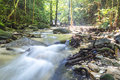 Mountain stream in deep tropical forest Royalty Free Stock Image