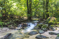 Mountain stream in deep tropical forest Royalty Free Stock Images