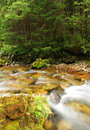 Mountain stream in dolina bialego tatra mountains poland Stock Photos